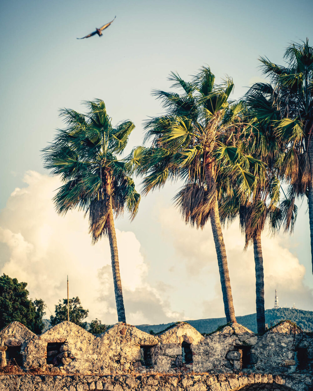 Burgmauer mit Palmen im Wind, eine Dohle fliegt durch das Bild