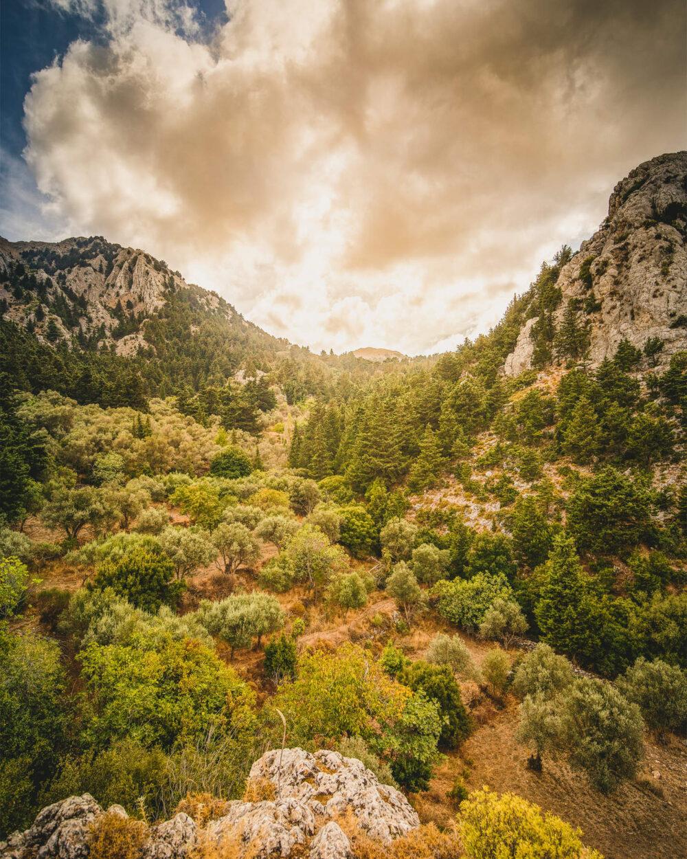 Grüne Berghänge mit Olivenbäumen in Zia, Kos, Griechenland