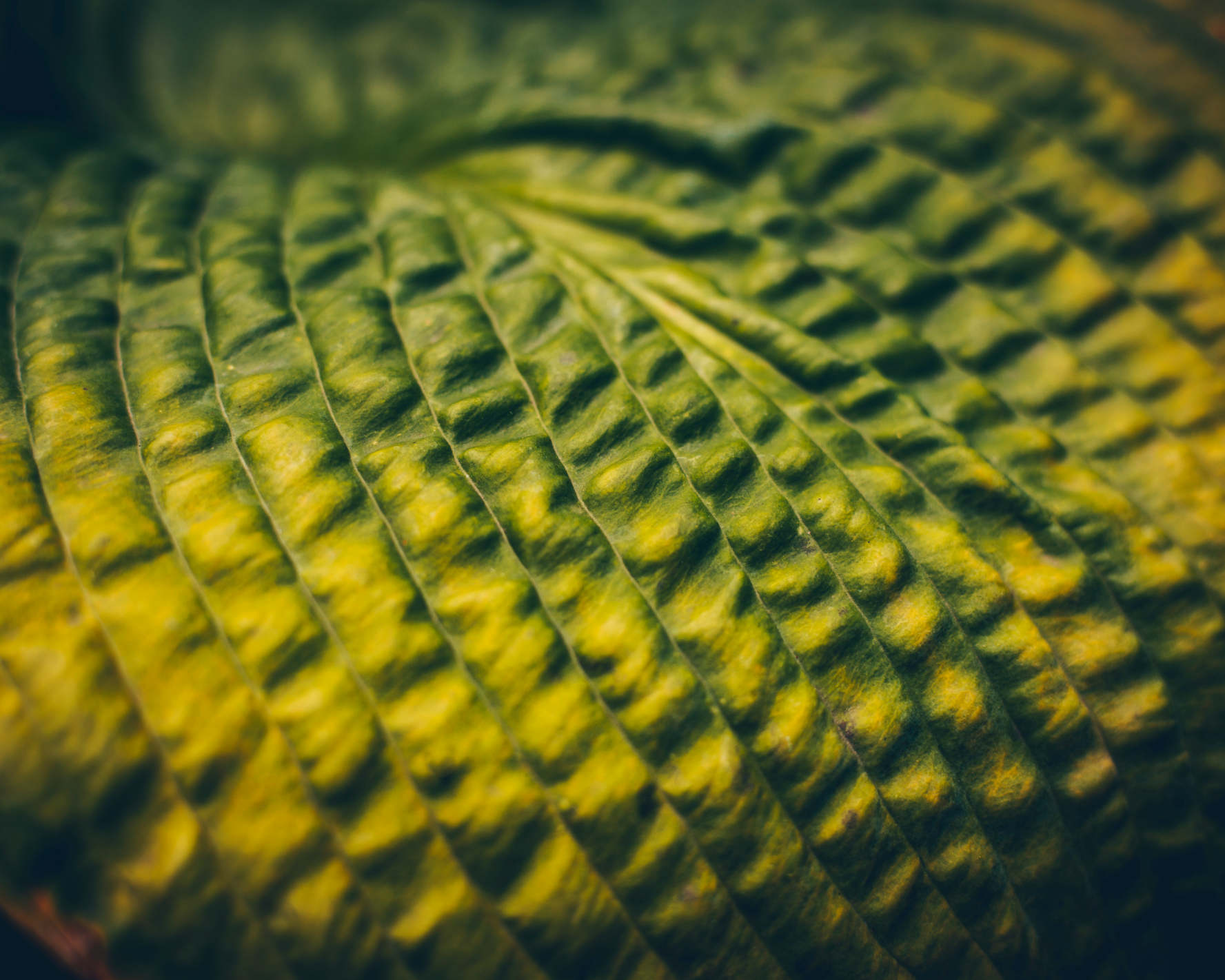 Extreme Makroaufnahme eines Blatts, dessen Struktur wie Reihenhäuser aussieht