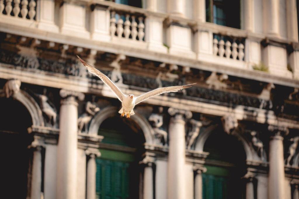 Die Möwe am Markusplatz aus der Edition Romantisches Venedig ist eines der Headliner-Motive für Art for the Earth